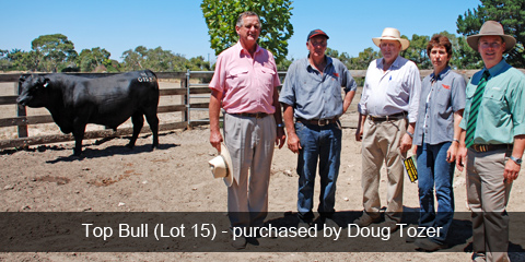 Top priced bull purchased by Doug Tozer
